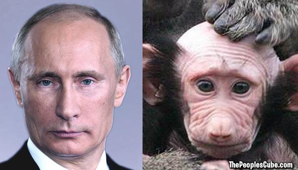 Options Russian Ape Woman