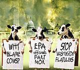 cow farts washington flatulence funny cartoon