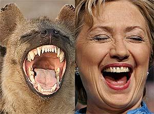 Hillary Hyena DNA