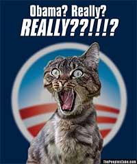 Cats don't like Obama parody