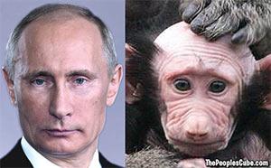 Pootie-Poo monkey