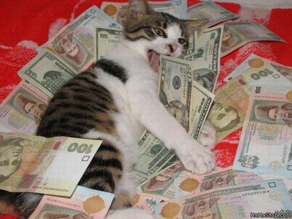 Cat_Loves_Money.jpg