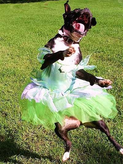 Dog_in_a_Dress_Michelle_Oba.jpg
