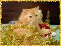 Kitty_New_Year.jpg