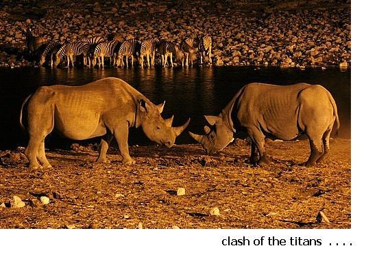 rhino-s-fighting.jpg