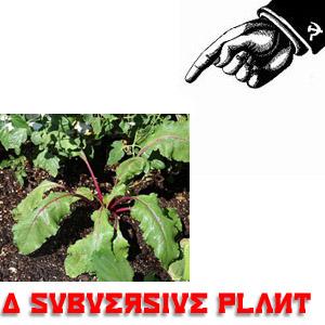 SubversivePlant.jpg