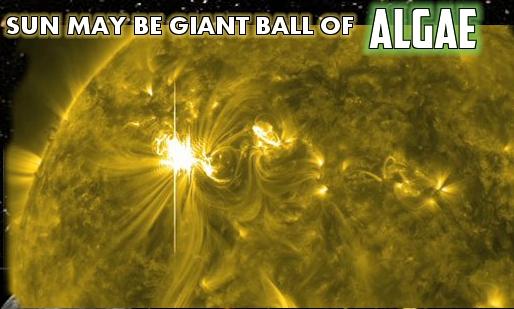 algae sun.jpg