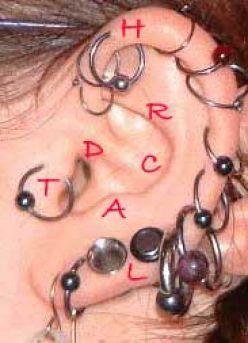 ear ring.jpg