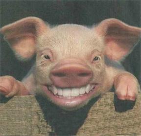 PigSmiling.jpg