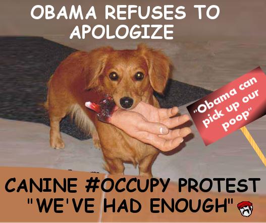 canine occupy.jpg