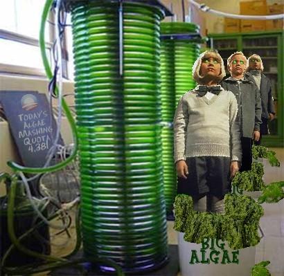 Algae_production_05.jpg