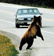 bear hitch.jpg