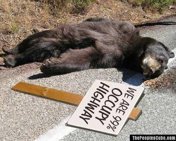 Occupy_Bear_Roadkill.jpg