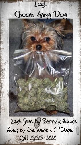 marijuana-dog.jpg