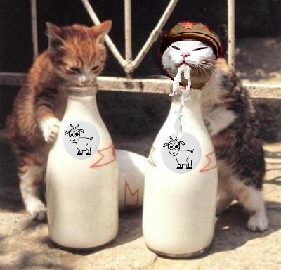 mt drink milk.jpg