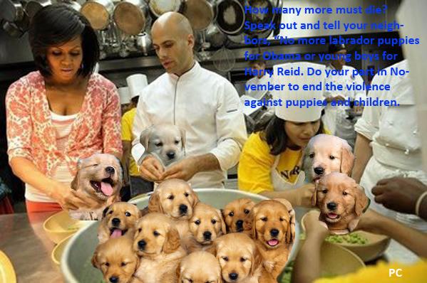puppyfood.jpg