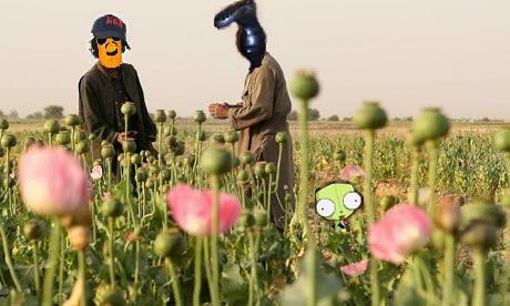 buf che poppy field.jpg