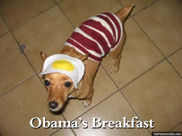Doggie_Obamas_Breakfast.jpg