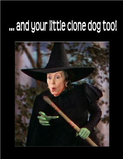 wicked-witch6.jpg