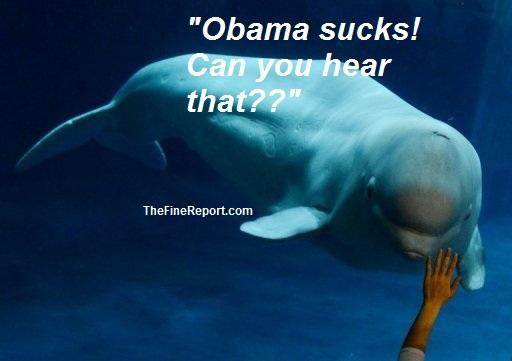 Beluga whale edited.jpg