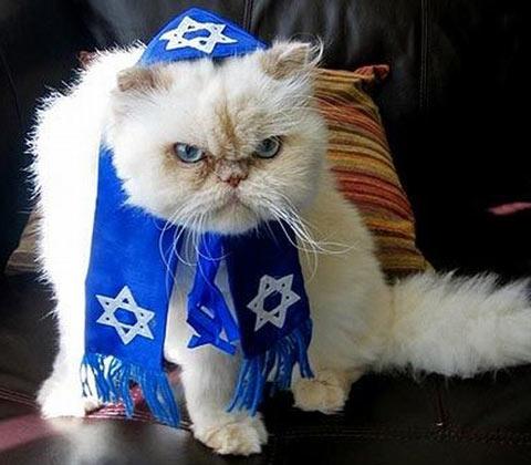 jew cat.jpg