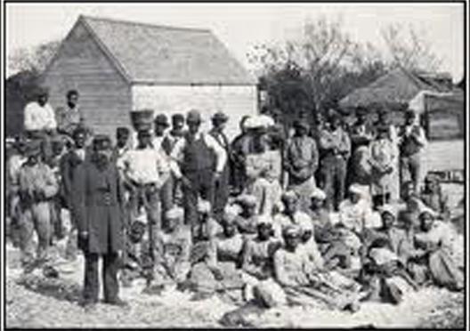democrat plantation.jpg
