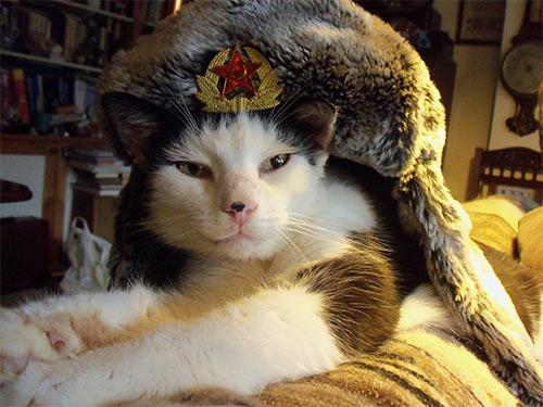 Cat_Comrade.jpg