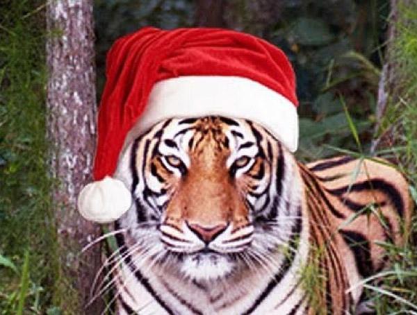 TigerChristmas.jpg