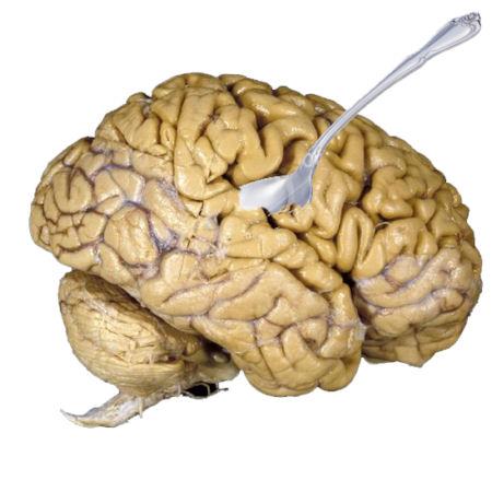 human-brain_1001_600x450.jpg