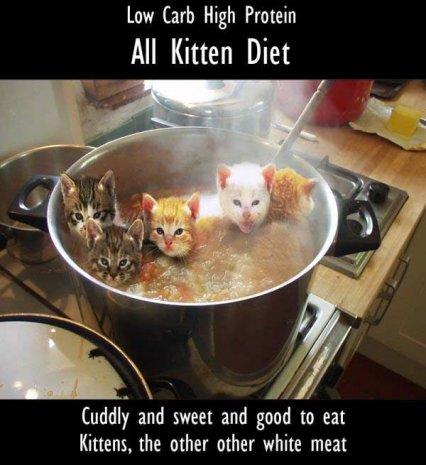 9_kittensnt5.jpg