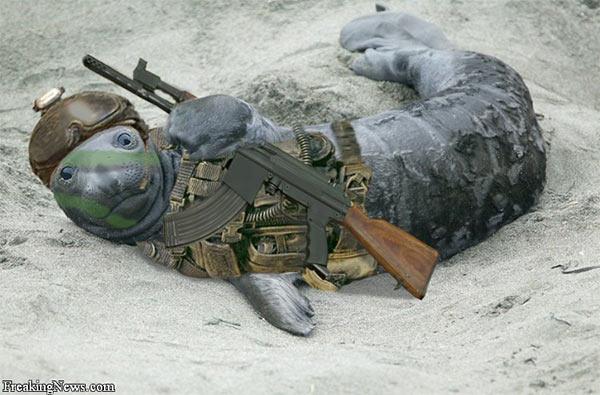 Navy_Seal.jpg