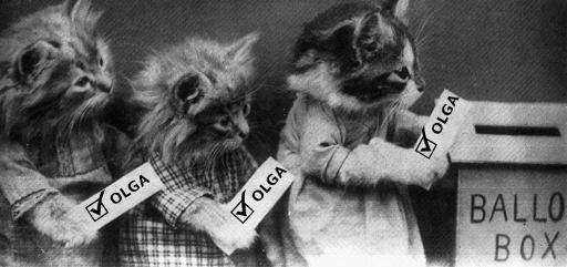 kittens-voting.jpg