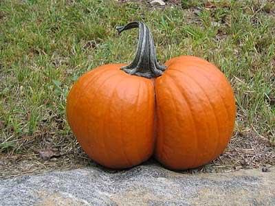 Pumpkin_Butt.jpg