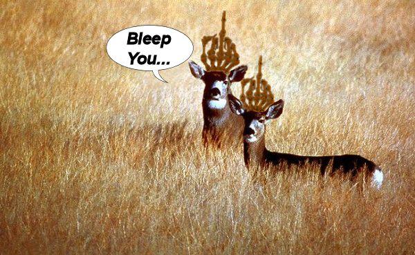 DeerSlide1-600x369.jpg