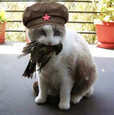 catwithbird.jpg