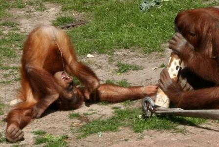 20688-monkeypee.jpg