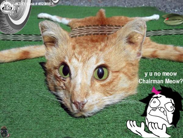 chairman-meow-no-meow1.jpg