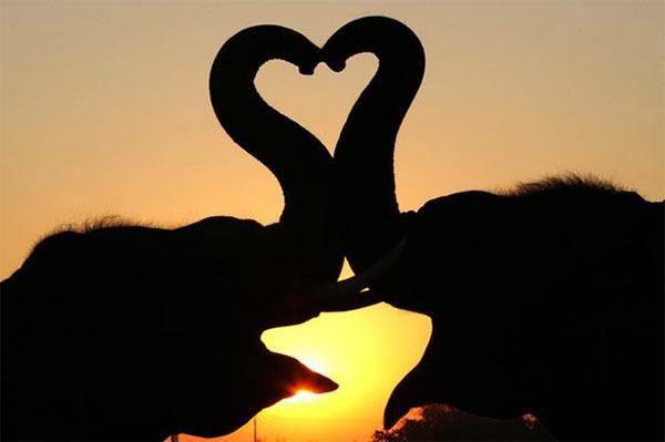 Elephants_Kissing.jpg