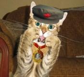 chairman-meow-new.jpg