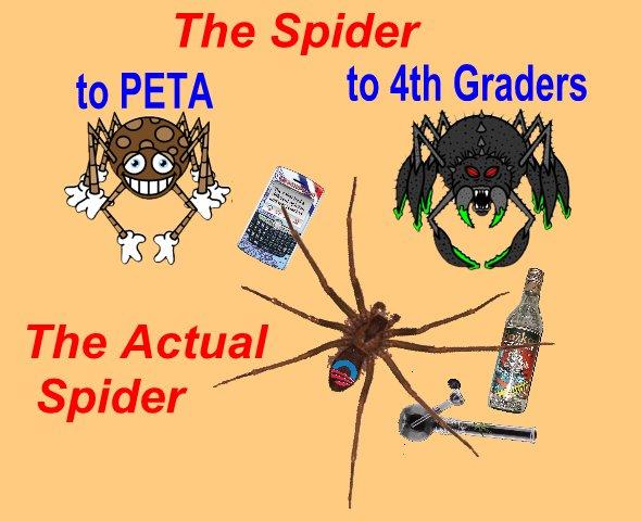 Spiders1.jpg