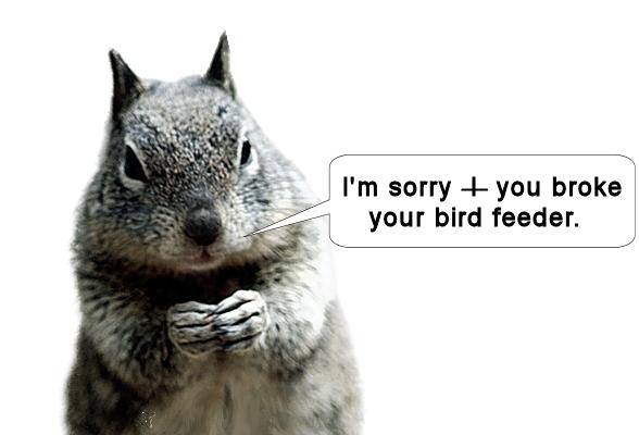 sorry squirrel.jpg