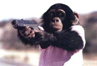 monkey-gun-thumb-400x272-12159.jpg