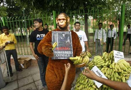 Monkey_Suit.jpg