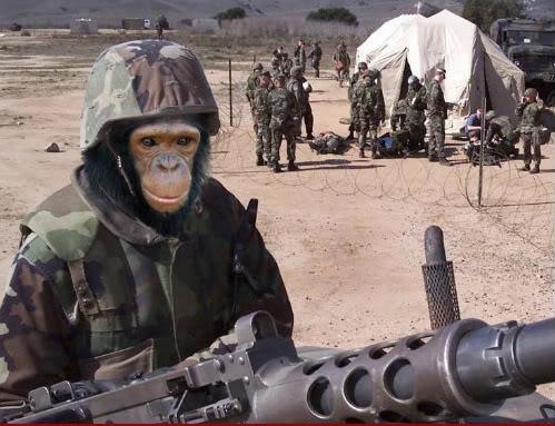 Military-Chimp--18463.jpg