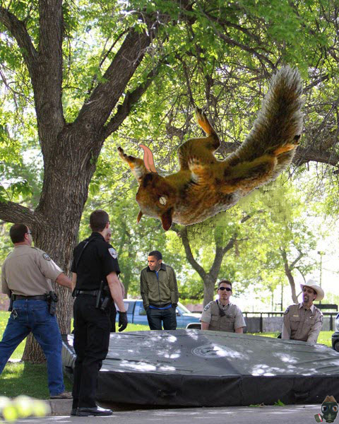 squirrel-falls.jpg