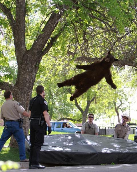 bear-falls.jpg