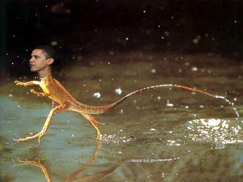 obama-lizard 2.jpg