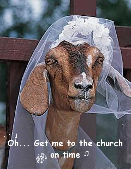 goat bride.jpg