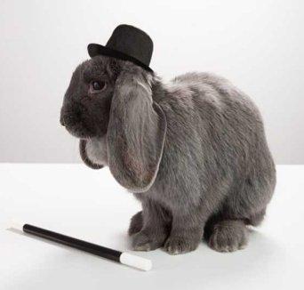 rabbit-wearing-top-hat-with-magic-wand.jpg