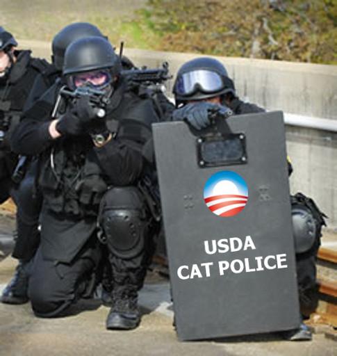 swat-police-cat.jpg